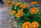 guido-3129-flowers-07