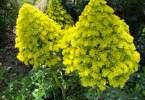 guido-3129-flowers-08