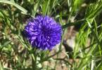 guido-3129-flowers-09