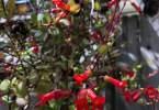 guido-3129-flowers-10