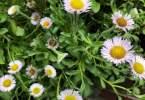 guido-3129-flowers-14