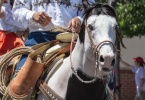 event-4th-of-july-alameda-2013-horse-riders-09