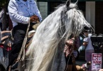 event-4th-of-july-alameda-2013-horse-riders-white-mane-1