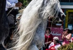 event-4th-of-july-alameda-2013-horse-riders-white-mane-2