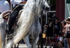 event-4th-of-july-alameda-2013-horse-riders-white-mane-3