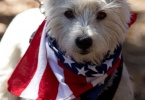 event-4th-of-july-berkeley-california-claremont-neighborhood-round-park-parade-celebration-dogs-01