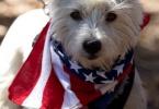 event-4th-of-july-berkeley-california-claremont-neighborhood-round-park-parade-celebration-dogs-01