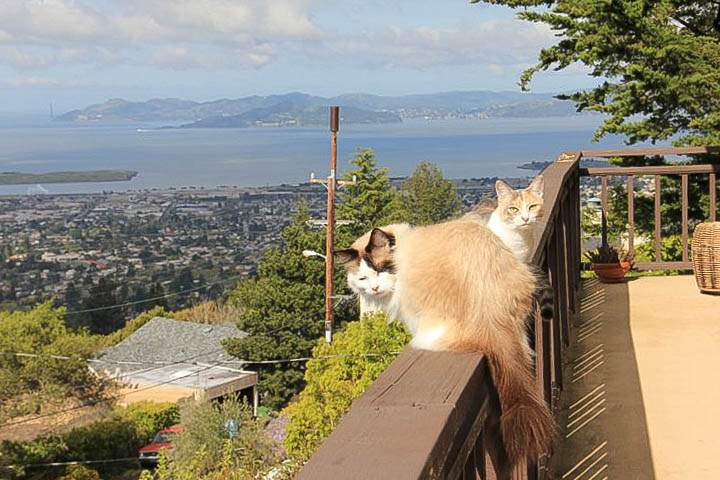 sterling-1079-berkeley-hills-animals-cats-2