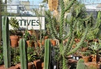 berkeley-ca-fourth-street-garden-cactus-jungle-1509-4th-street-cactusjungle-dot-com-2