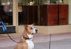 berkeley-ca-fourth-street-market-hall-coffee-tea-peets-teance-rouge-musicians-pave-dog-2