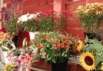 berkeley-ca-elmwood-neighborhood-florist-2936-college-avenue-elmwood-cafe-was-elmwood-blooming-alley-florist-2