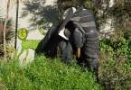 berkeley-hills-mural-tire-elephant-scenic-cedar-2