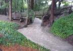 berkeley-california-north-live-oak-park-codornices-creek-heavy-rain-torrent-1
