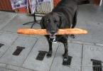 berkeley-north-dog-baguette-2