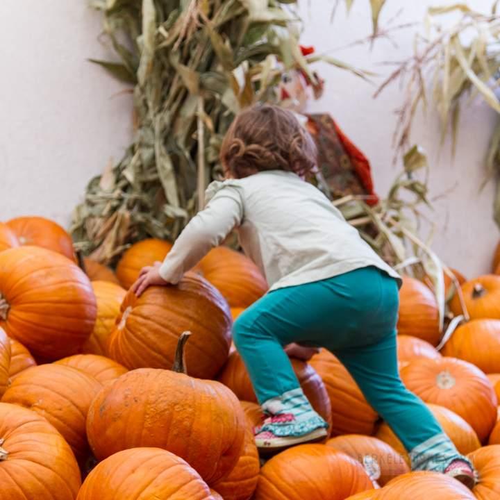 berkeley-california-northbrae-westbrae-neighborhood-produce-monterey-market-1550-hopkins-pumpkins-halloween-kid-1-3