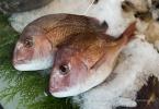 berkeley-ca-northbrae-westbrae-neighborhood-monterey-fish-market-1582-hopkins-4