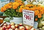 berkeley-ca-northbrae-westbrae-neighborhood-monterey-market-1550-hopkins-fruit-vegetables-11