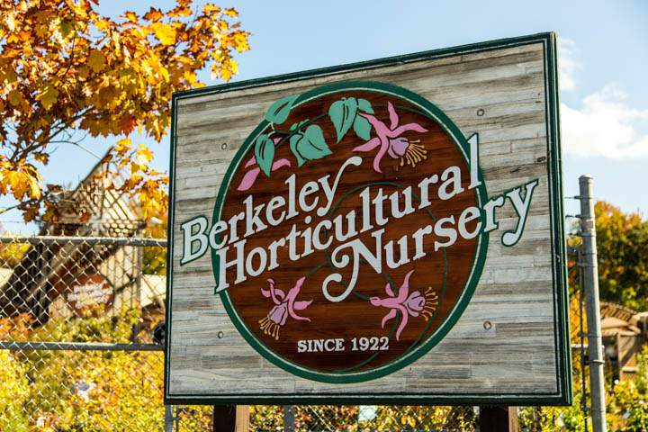 berkeley-ca-northbrae-westbrae-neighborhood-berkeley-horticultural-nursery-1310-mcgee-7