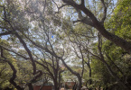 9-berkeley-thousand-oaks-neighborhood-the-alameda-721-oak-yard-h-218-HDR-Pano