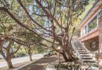 9-berkeley-thousand-oaks-neighborhood-the-alameda-721-oak-yard-h-372-HDR-Pano