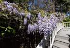 0-milvia-1236-north-berkeley-neighborhood-flowers-01