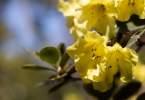 0-milvia-1236-north-berkeley-neighborhood-flowers-05