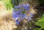 0-milvia-1236-north-berkeley-neighborhood-flowers-06