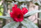 0-milvia-1236-north-berkeley-neighborhood-flowers-08