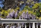 0-milvia-1236-north-berkeley-neighborhood-flowers-10