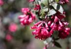 0-milvia-1236-north-berkeley-neighborhood-flowers-13