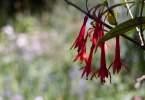 0-milvia-1236-north-berkeley-neighborhood-flowers-14