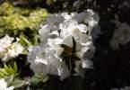 0-milvia-1236-north-berkeley-neighborhood-flowers-15