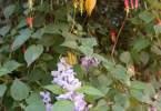 0-milvia-1236-north-berkeley-neighborhood-flowers-17