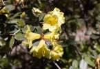 0-milvia-1236-north-berkeley-neighborhood-flowers-18
