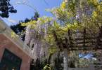 0-milvia-1236-north-berkeley-neighborhood-flowers-19