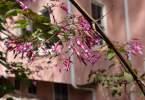 0-milvia-1236-north-berkeley-neighborhood-flowers-21