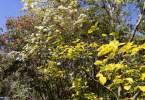 0-milvia-1236-north-berkeley-neighborhood-flowers-22