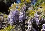 0-milvia-1236-north-berkeley-neighborhood-flowers-23