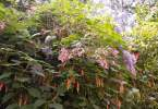 0-milvia-1236-north-berkeley-neighborhood-flowers-24