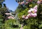 0-milvia-1236-north-berkeley-neighborhood-flowers-26