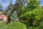 0-milvia-1236-north-berkeley-neighborhood-garden-0-panorama