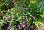 0-milvia-1236-north-berkeley-neighborhood-garden-owners-03