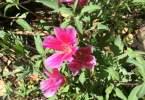 0-milvia-1236-north-berkeley-neighborhood-garden-owners-04