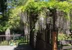 0-milvia-1236-north-berkeley-neighborhood-garden-owners-06
