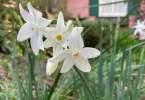 0-milvia-1236-north-berkeley-neighborhood-garden-owners-10