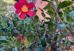 0-milvia-1236-north-berkeley-neighborhood-garden-owners-12