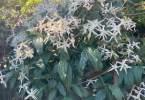 0-milvia-1236-north-berkeley-neighborhood-garden-owners-15
