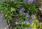 0-milvia-1236-north-berkeley-neighborhood-garden-owners-16